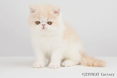 JIYUN'S XIONG DA– Male – owner: MISS.DAI